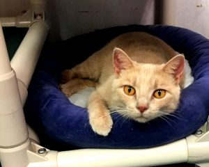 Cat of the Week - Suzy Q