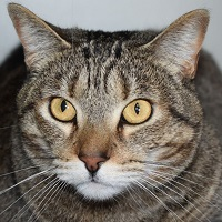 Cat of the Week – Greenbean