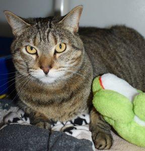 Cat of the Week - Greenbean