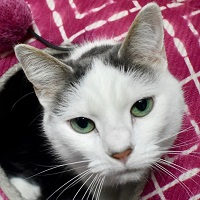 Cat of the Week – Zoey