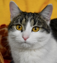 Cat of the Week – Minerva
