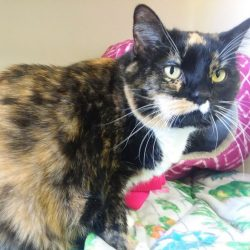 Cat of the Week – Kali