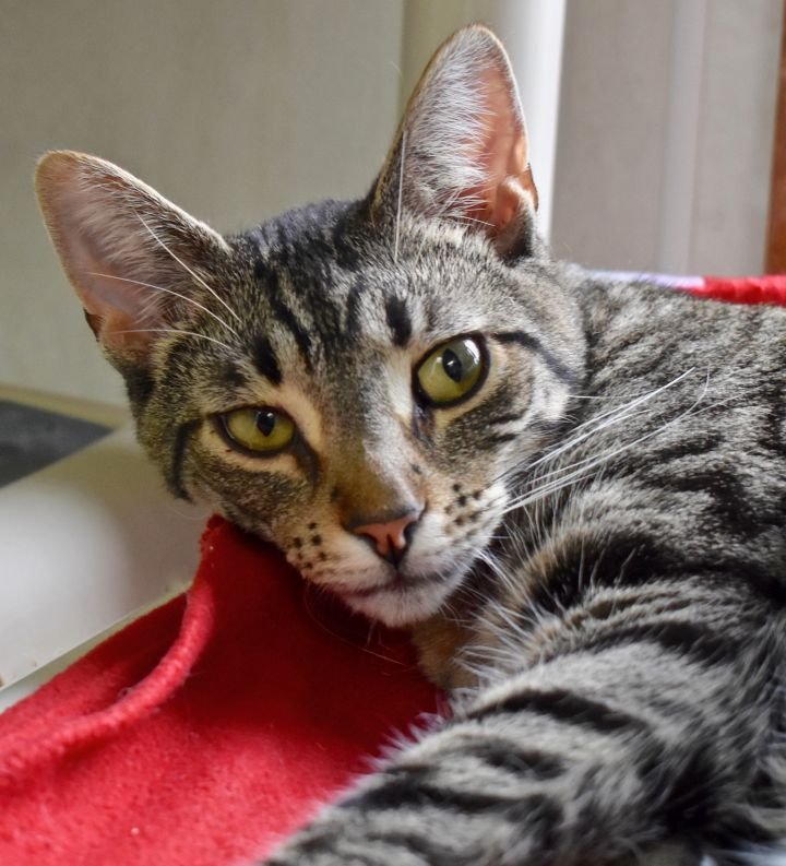 Cat of the Week – Humphrey