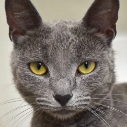 Cat of the Week – Sharona