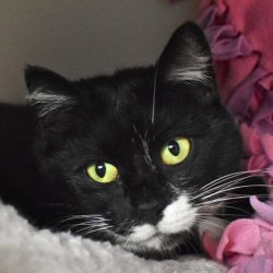 Cat of the Week – Raven
