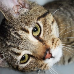 Cat of the Week – Hugo