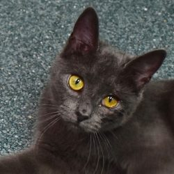 Cat of the Week – Katara