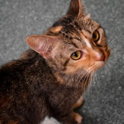 Cat of the Week – Shirley