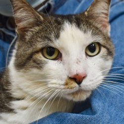 Cat of the Week – Charles