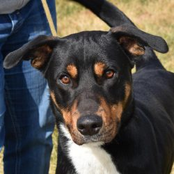 Dog of the Week – Caribou