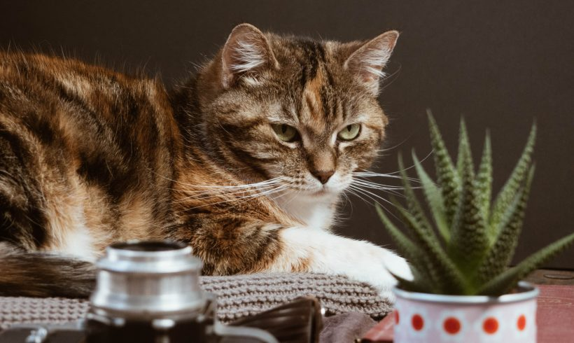 House plants can pose danger to your pets