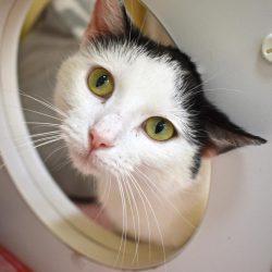 Cat of the Week – Poquita