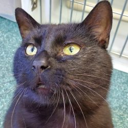 Cat of the Week – Duley