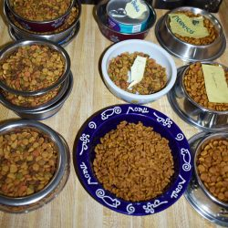 Basics of picking the right food for your pet