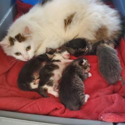 Properly separating kittens from mom and siblings