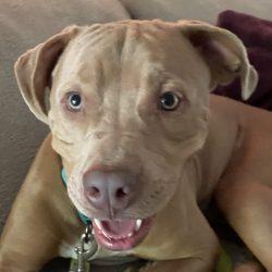 Video: Gus