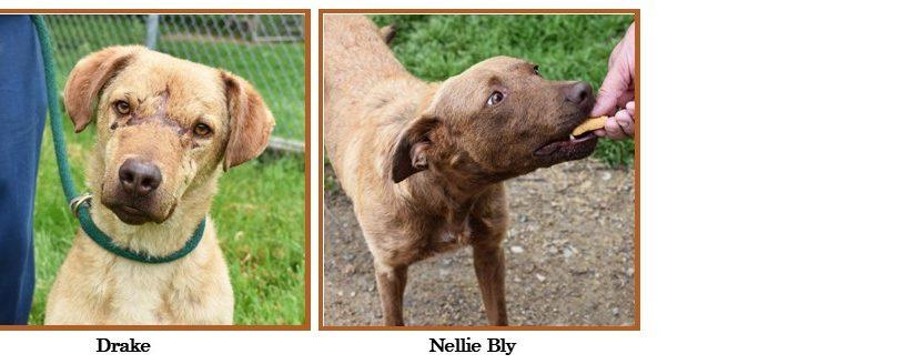 Dogs Desperately Seeking Homes