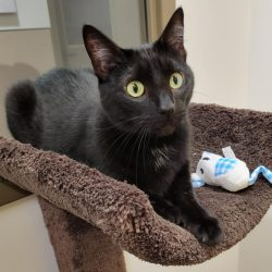 Cat of the Week – Dorothy