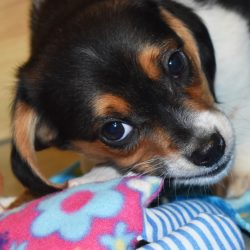 Return to routine can be stressful for dogs